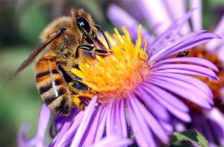 Κερί της Μέλισσας